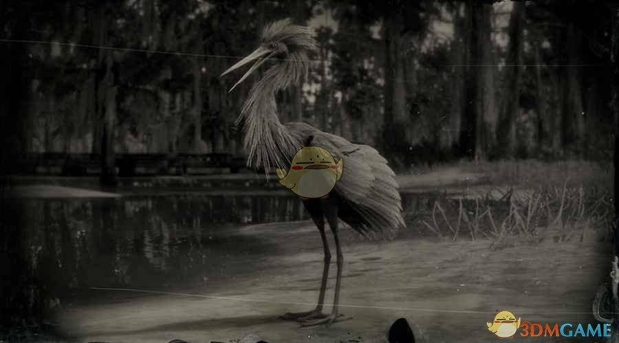 《荒野大镖客2》棕颈鹭图鉴一览