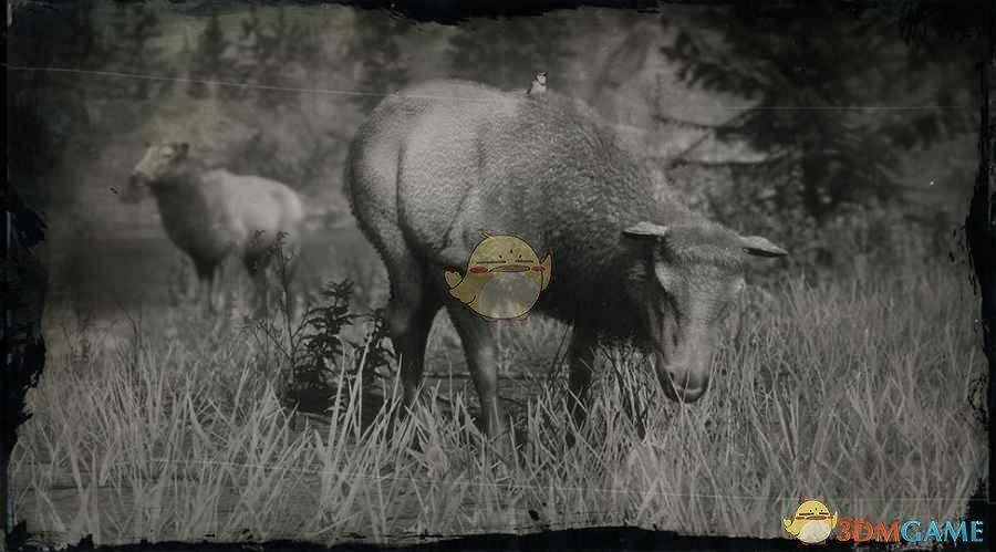 《荒野大镖客2》落基山脉母麋鹿图鉴一览