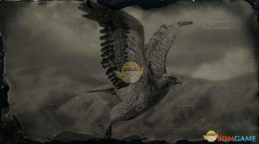 《荒野大镖客2》褐羽隼鹰图鉴一览
