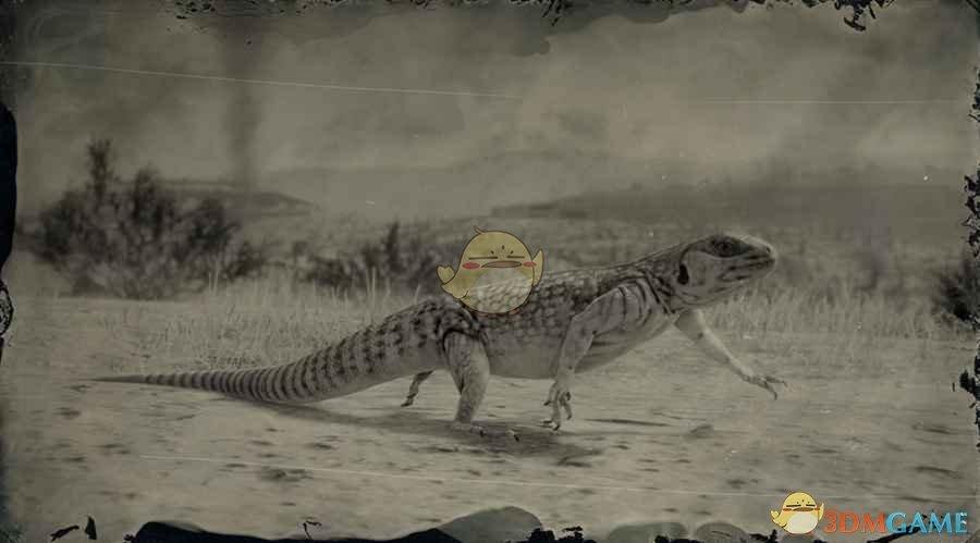 《荒野大镖客2》沙漠鬣蜥图鉴一览
