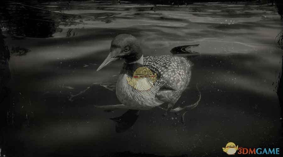 《荒野大镖客2》普通潜鸟图鉴一览