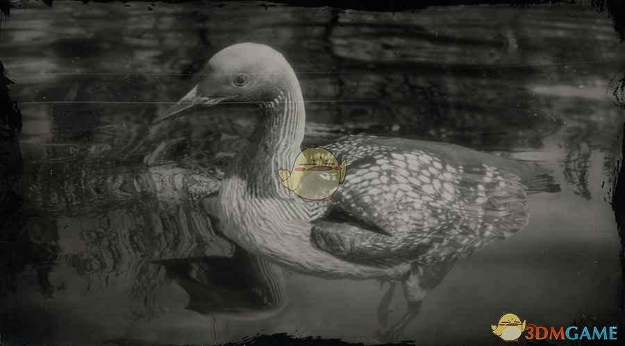 《荒野大镖客2》太平洋潜鸟图鉴一览