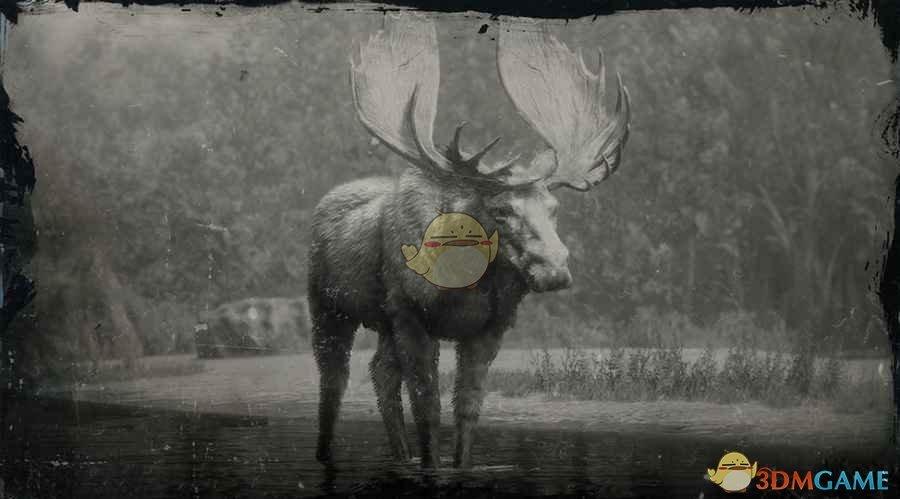 《荒野大镖客2》北美西部公驼鹿图鉴一览