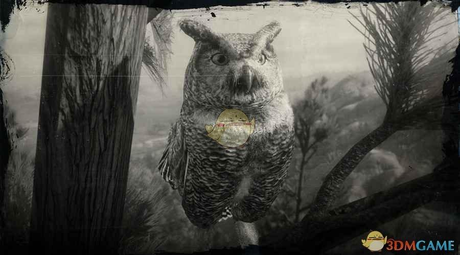 《荒野大镖客2》大角鸮图鉴一览