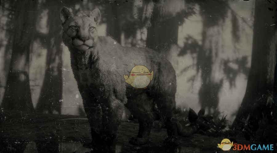 《荒野大镖客2》山狮图鉴一览