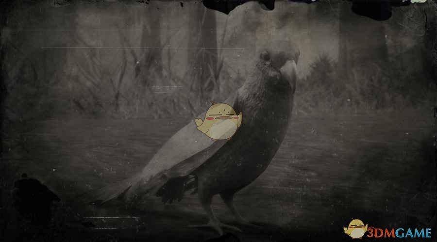 《荒野大镖客2》卡罗莱纳长尾鹦鹉图鉴一览