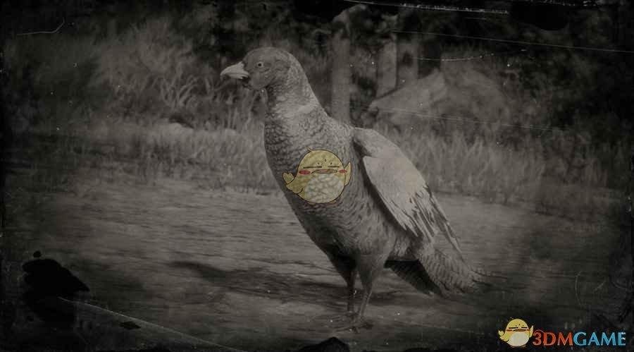 《荒野大镖客2》环颈雉图鉴一览