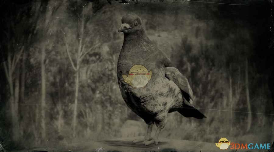 《荒野大镖客2》岩鸽图鉴一览
