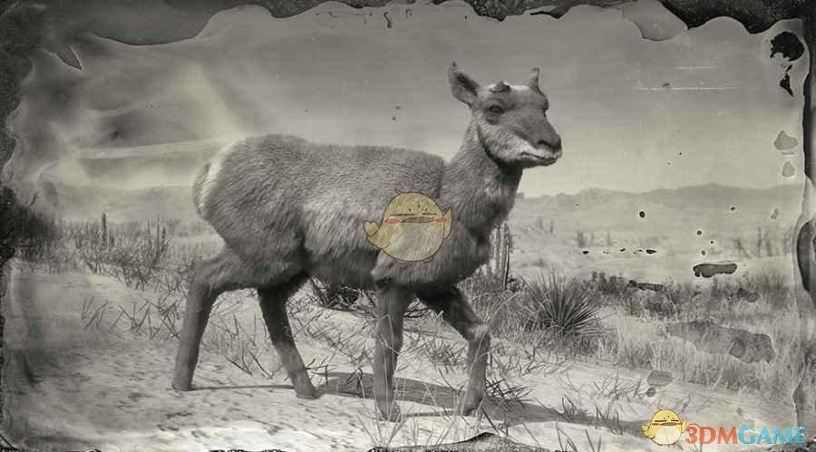 《荒野大镖客2》索诺兰母叉角羚图鉴一览