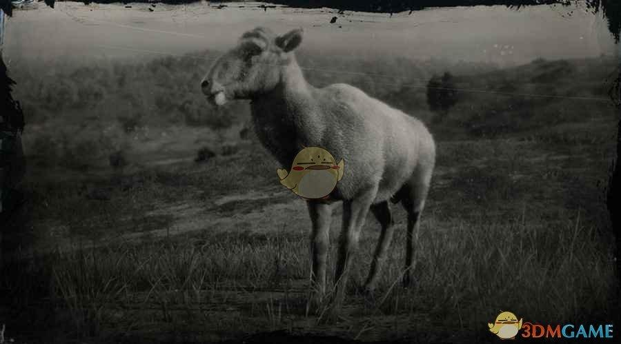 《荒野大镖客2》沙漠盘羊图鉴一览