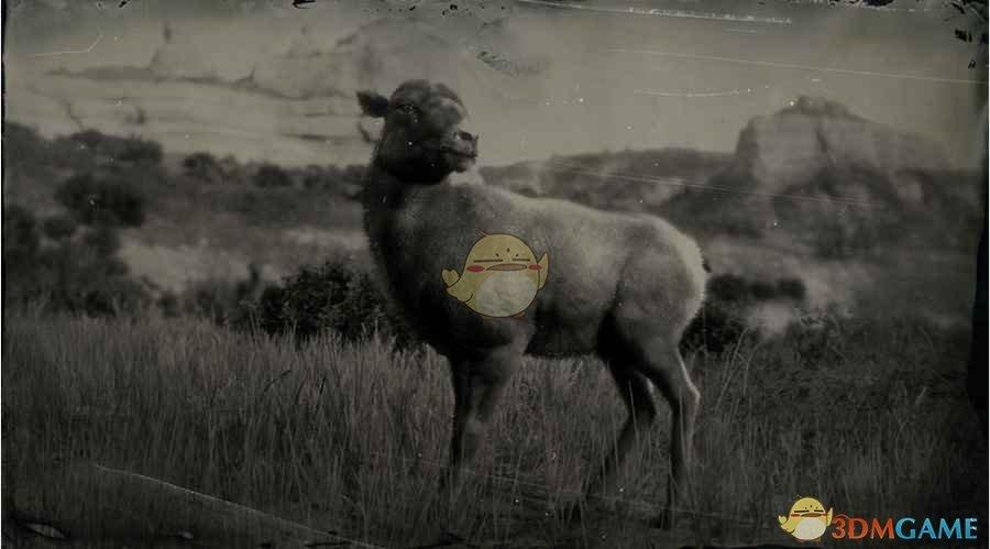 《荒野大镖客2》落基山脉盘羊图鉴一览