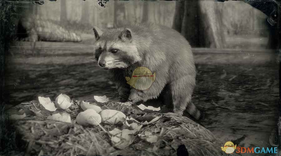 《荒野大镖客2》北美浣熊图鉴一览