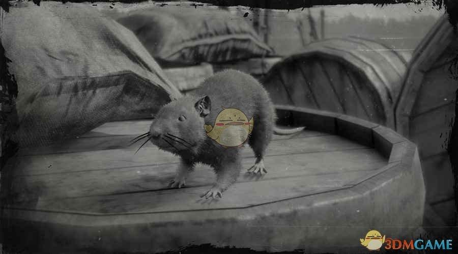 《荒野大镖客2》棕鼠图鉴一览