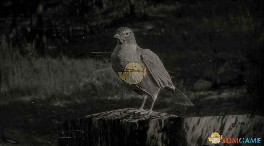 《荒野大镖客2》美洲知更鸟图鉴一览