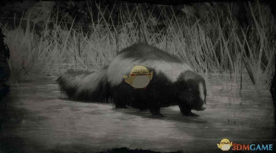 《荒野大镖客2》条纹臭鼬图鉴一览