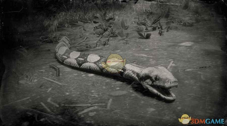 《荒野大镖客2》红尾蟒蛇图鉴一览