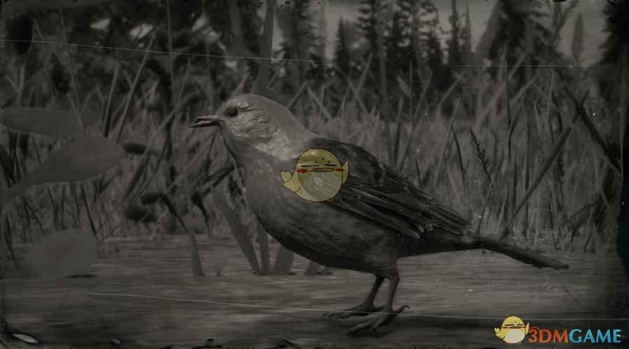 《荒野大镖客2》猩红丽唐纳鸣鸟图鉴一览