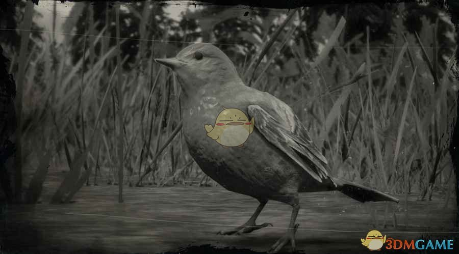 《荒野大镖客2》西部丽唐纳鸣鸟图鉴一览
