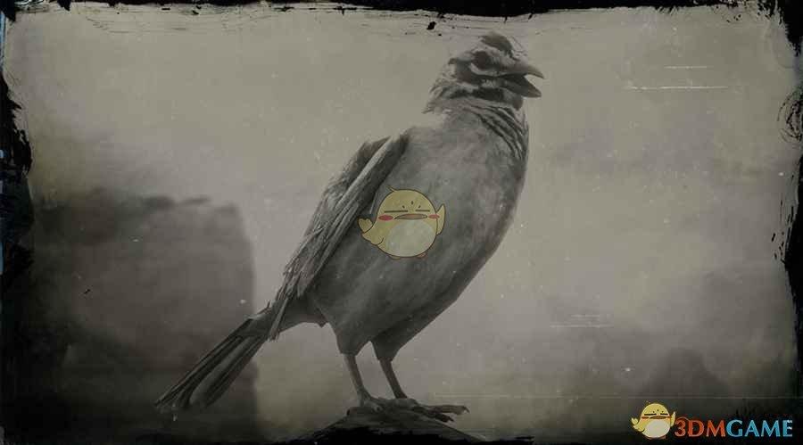 《荒野大镖客2》金冠雀图鉴一览
