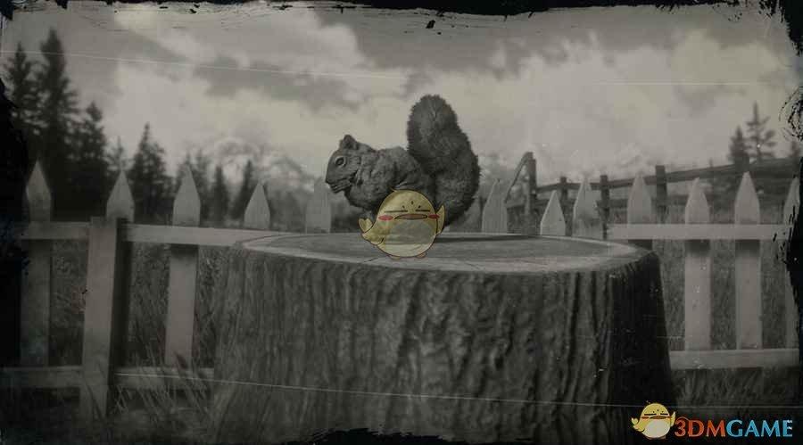 《荒野大镖客2》美国红松鼠图鉴一览