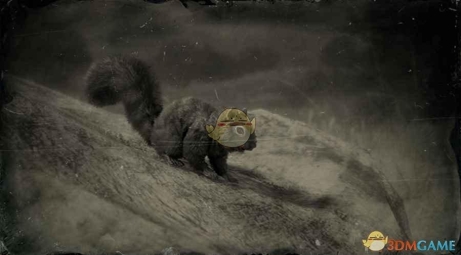《荒野大镖客2》黑松鼠图鉴一览