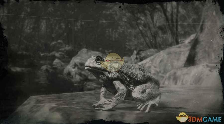 《荒野大镖客2》北美西部蟾蜍图鉴一览