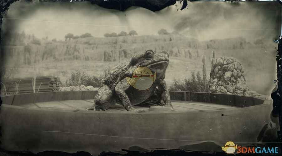 《荒野大镖客2》索诺拉沙漠蟾蜍图鉴一览