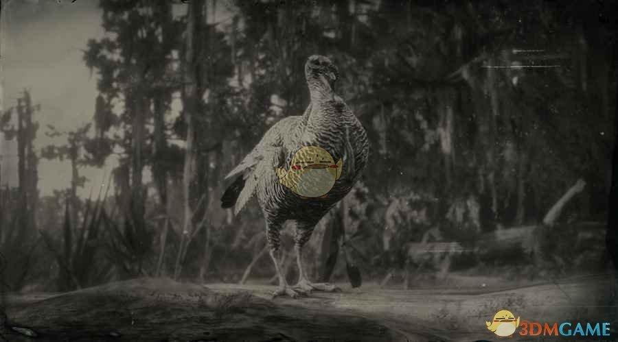 《荒野大镖客2》里奥格兰德野火鸡图鉴一览