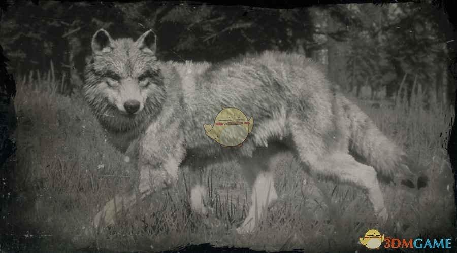 《荒野大镖客2》灰狼图鉴一览