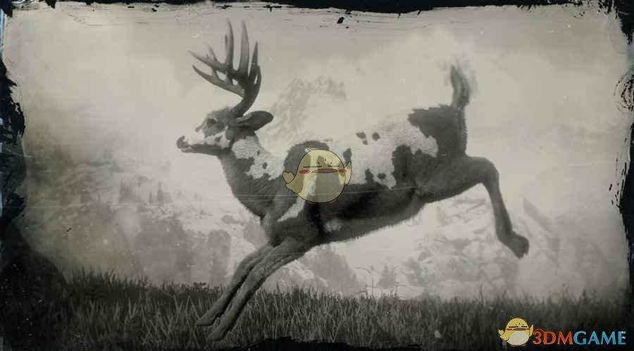 《荒野大镖客2》传说公鹿图鉴一览