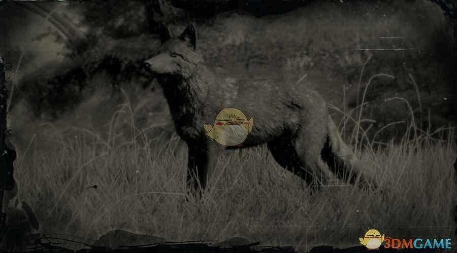 《荒野大镖客2》传说郊狼图鉴一览