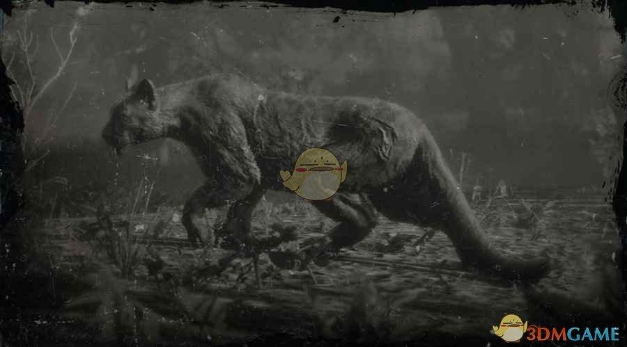 《荒野大镖客2》传说山狮贾古阿罗图鉴一览