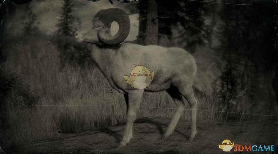 《荒野大镖客2》传说公盘羊图鉴一览
