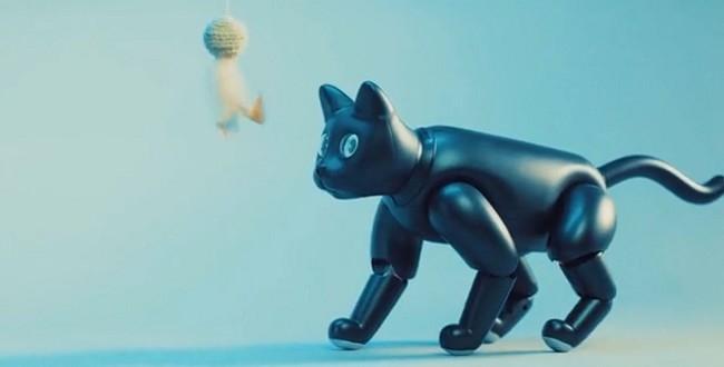 """对标索尼爱宝狗?!新机器宠物猫""""火星猫""""人气众筹开启"""