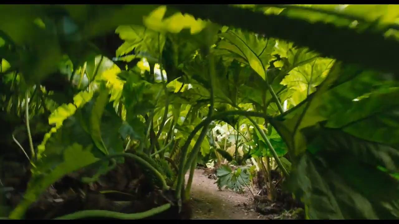 科林·费斯主演 新版《秘密花园》发布新预告