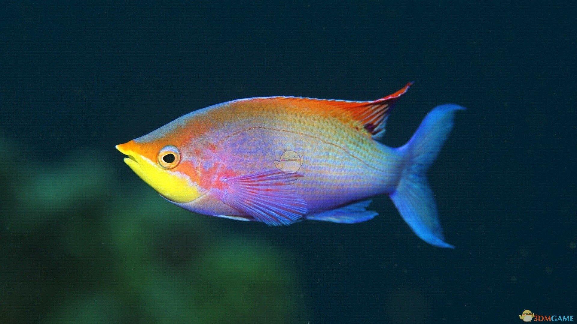 《集合啦!动物森友会》彩虹鱼图鉴