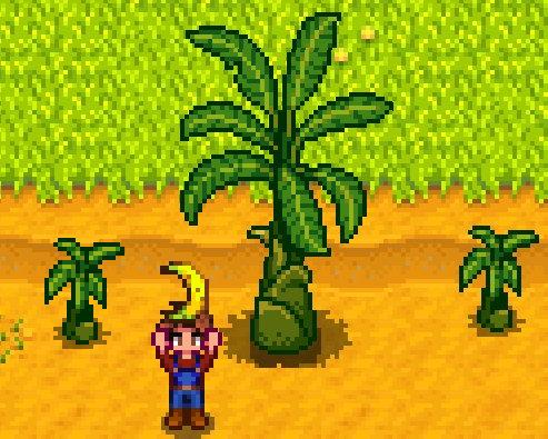 《星露谷物语》新更新将添加香蕉树 玩家的期待