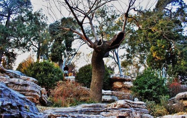 3言两语丨刀塔职业圈的后山上,没有那棵老歪脖子树