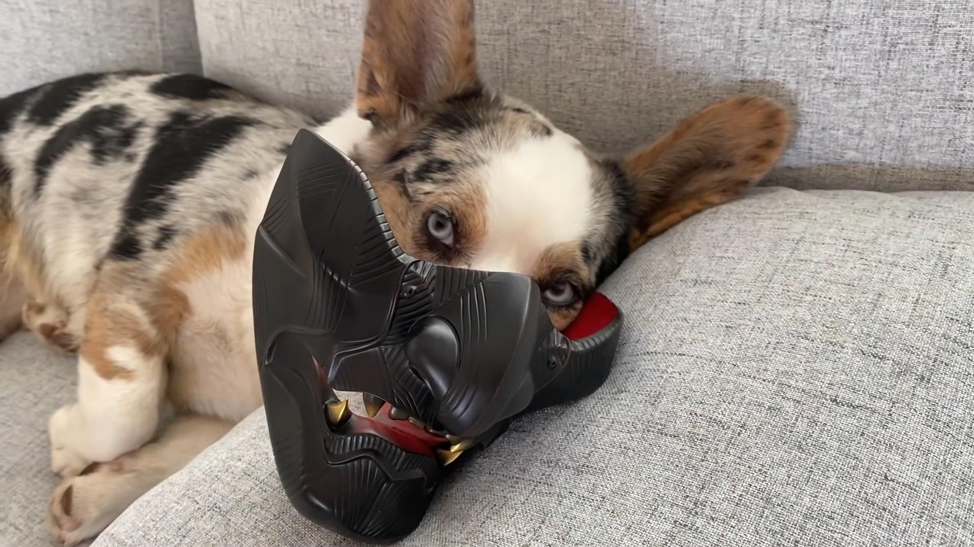 《对马岛之鬼》实体典藏版开箱视频 狗狗戴面具好酷