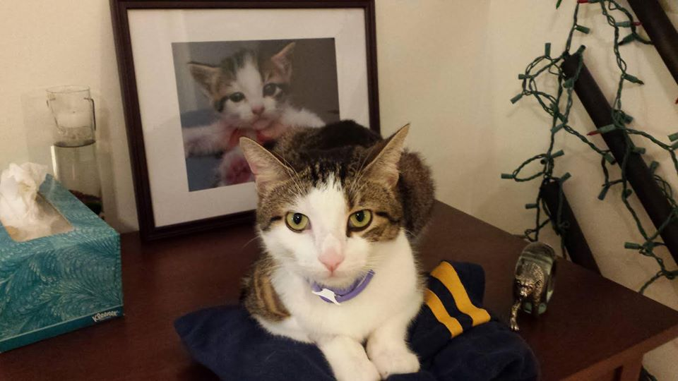 《辐射4/76》中画像登场的原型猫咪心脏病不治去世 享年10岁