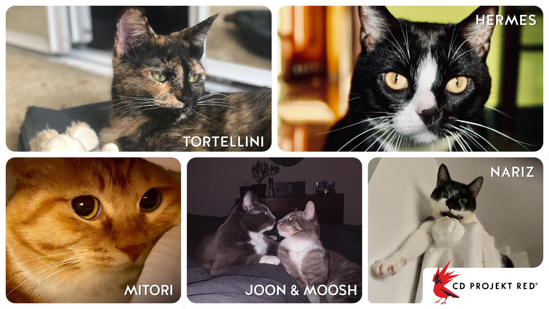 国际爱猫日!CDPR晒出员工家里的喵星人们