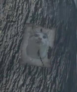 《恶魔之魂:重制版》的猫咪照片没了 玩家很不爽
