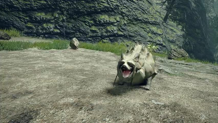 《怪物猎人:崛起》狸兽视频 貌似狸猫能胀大身体