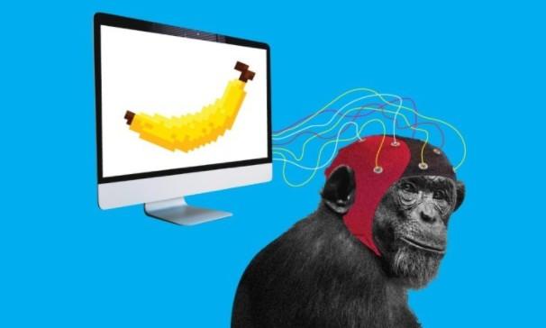 马斯克宣布将芯片植入猴子大脑 它们可开心玩电子游戏
