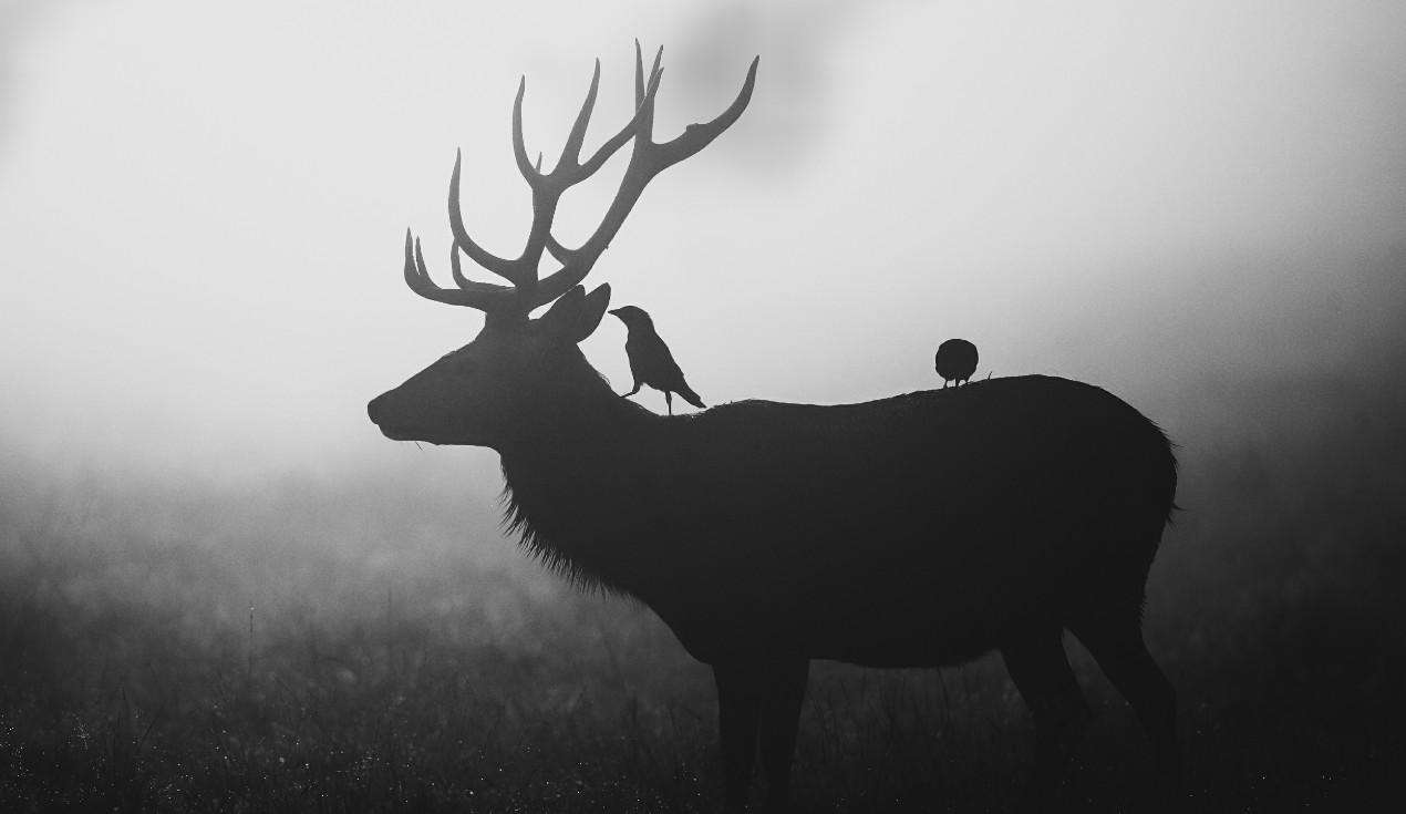 《Wallpaper Engine》鸟与鹿黑白灰风格动态壁纸