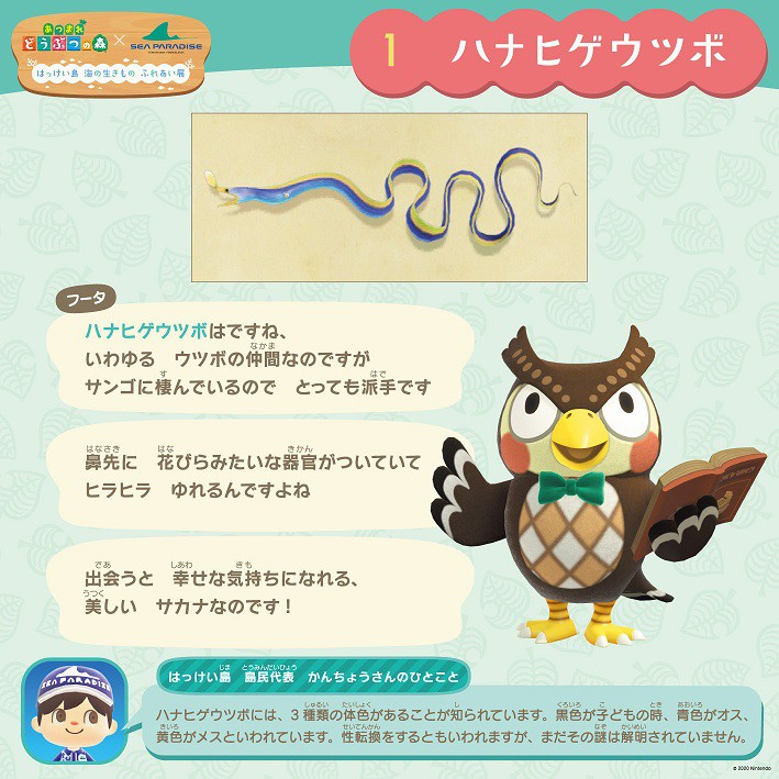 横滨八景岛海洋乐园联动《集合啦!动物森友会》 将举办横滨岛海洋生物交流展