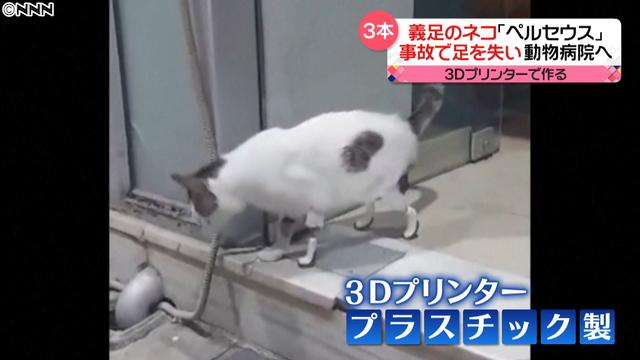 希腊兽医活用3D打印技术 让因事故单腿猫重新行走