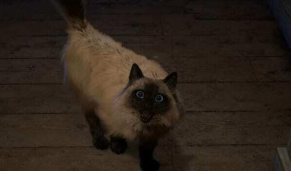 史艾新游《魔咒之地》主角的猫引发关注 官方回应会保护猫的安全