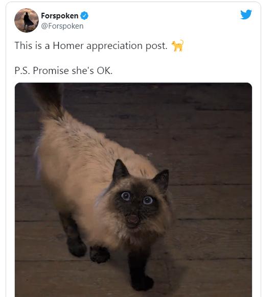 史艾新游《魔咒之地》主角的猫引发关注 官方回应保证不会出事