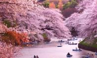 5月起 日本旅游签证可在网上申请